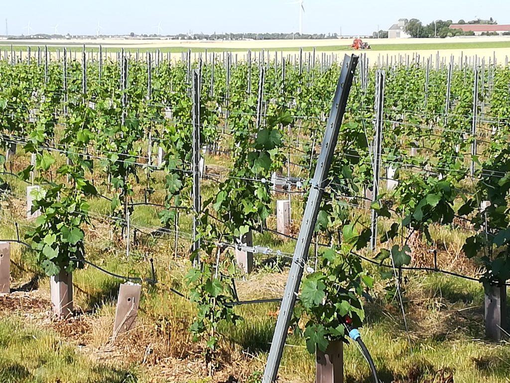 Vue sur la parcelle de Nouvelle Plaine, votre vignoble en Beauce